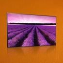 Экран (матрица) телевизора LG 24TK410V-PZ